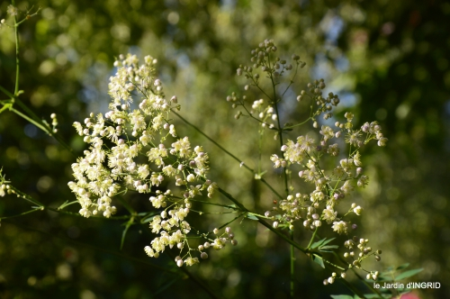 jardin pluie,Inès,Bébés cygnes,bouquet,canal 093.JPG
