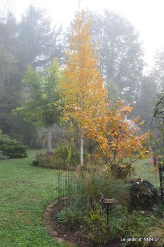 sauges,bouleau,coucher de soleil,érables,automne 110.JPG