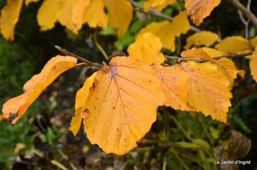 automne,arbres,inondation 098.JPG