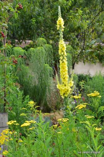 tournesols,pt jardin,nénuphard,libellules,lavande bouquet,carava 040-001.JPG