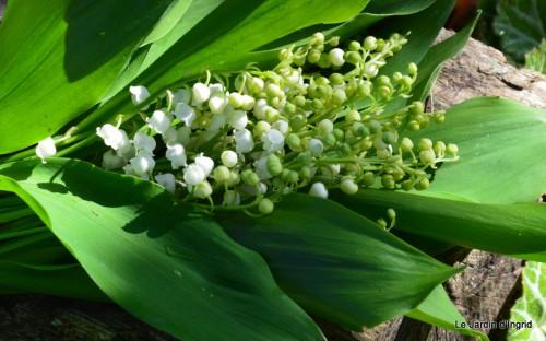 mésanges,escargots,ros. de banks,abeilles,Monpazier,Banes,Forêt 113-001.JPG
