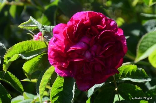 jardin avril et mai, 130.JPG