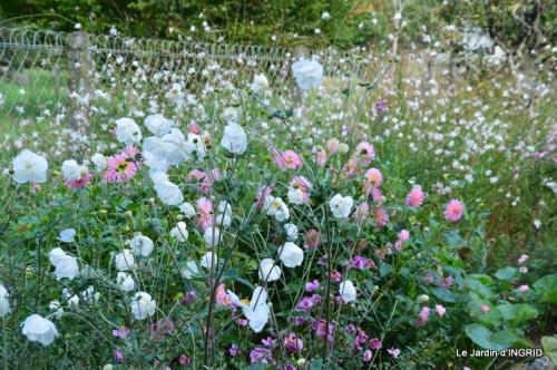 jardin Mme Perichou,grandes fleurs,bouquet,jardin 030.JPG