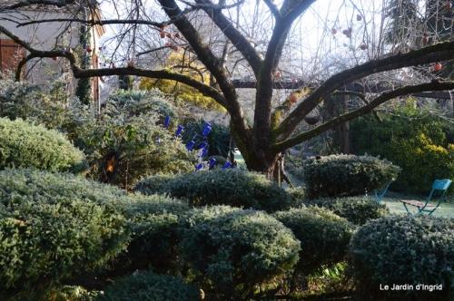 jardin givré,oiseaux 108.JPG
