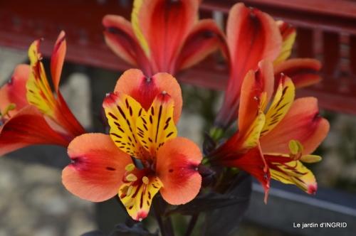 Colombier,Cadouin,jardin,roses,pluie 046.JPG