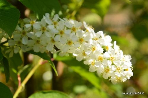 geais,jardin,printemps 063.JPG