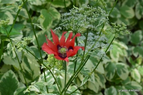 Roses du jardin,soirée Monpazier,puces Eymet 035.JPG