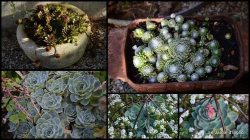 2014-08-19 jardin le matin,la mare1.jpg