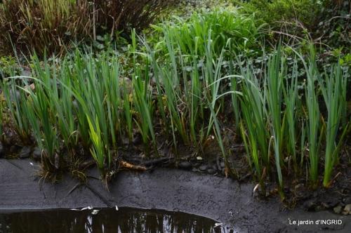 semis,bassin,tour du jardin 070.JPG