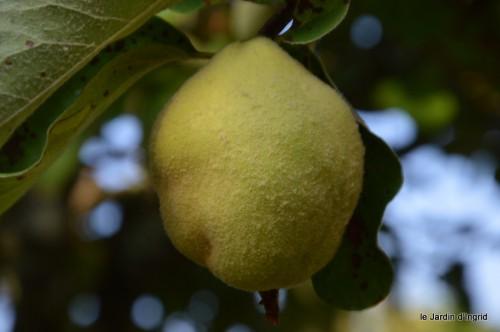 jardin,fruits,Caro,papillons,manthe religieuse,Lalinde 044-001.JPG