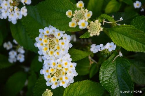 Fleurettes,Dordogne,jardin 114.JPG