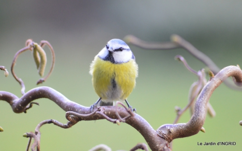 les oiseaux ,2 partie 084.JPG