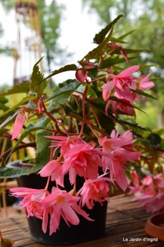 jardin,le cypres chauve,puces Mouleydier,vieilles photos 018.JPG