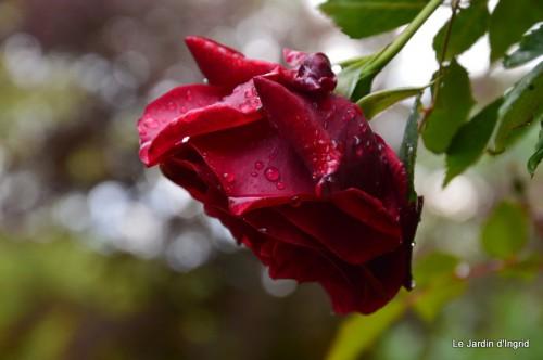 jardin,roses,cabane 121.JPG