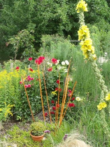 jardin 2010 2011 les plus belles 066.JPG