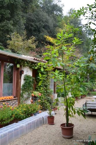 ménage automne,plectanthrus,feuillages 002.JPG