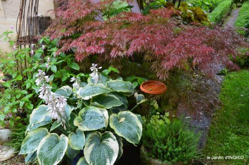 jardin pluie,Inès,Bébés cygnes,bouquet,canal 179.JPG
