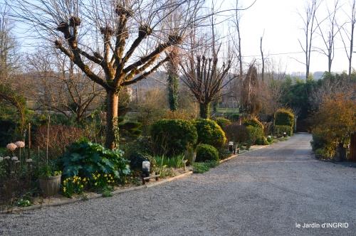 paillage,primevères,jonquilles,jardin 080.JPG