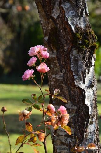 jardin givré,taille de prunus 004.JPG