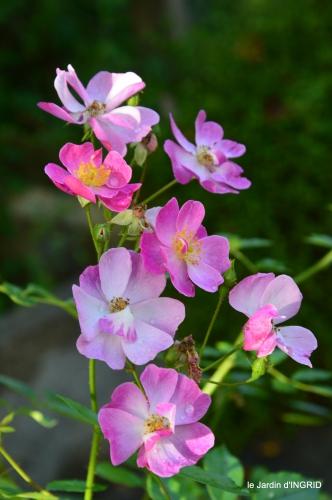 tour de jardin,bouquet,chez Bernadette, 065.JPG