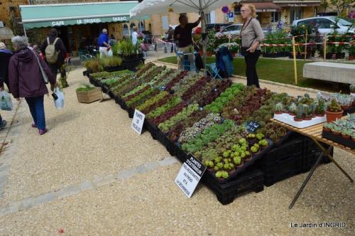 Cadouin,ancolies,roses,pollen,osier,photos Fabien,coquelicots 037.JPG