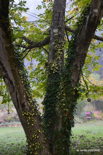 brouillard le matin d'automne 041.JPG