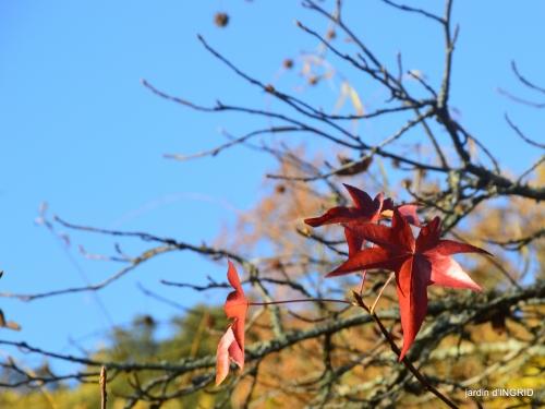 fin de l'automne,Lalinde,bouquet de l'avent 032.JPG