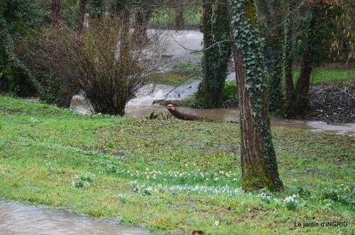 bulbes,perce neige,narcisse,pluie,hélébore,chapelle 152.jpg