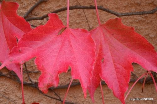 chez Caro,jardin automne 014.JPG