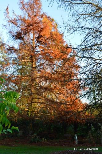 jardin, feuilles,sauges,gloriette,land art 139.JPG