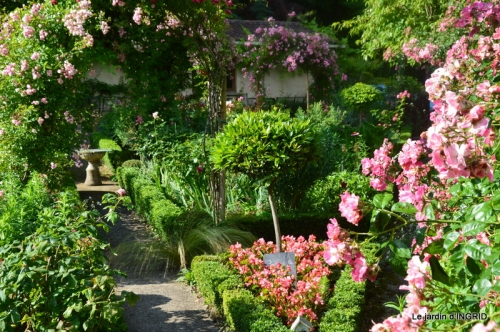 bouquet champêtre,jardin,hémérocalles,nénuphards 001.JPG