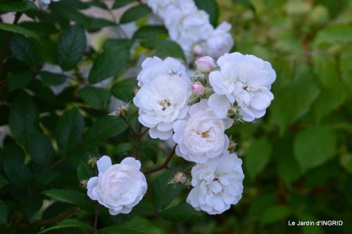 fête de la fraise Vergt,roses jardin 090.JPG
