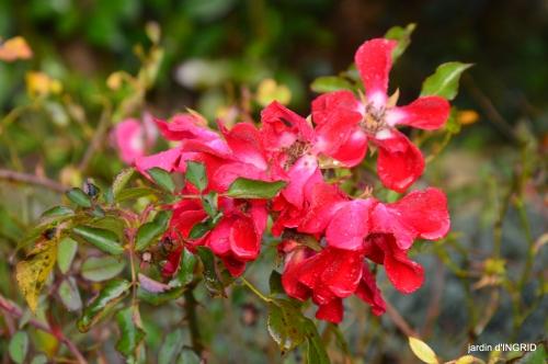 couleurs d'automne,bouquet,lune 114.JPG