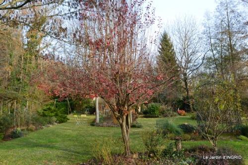 taille,arbustes,poinsettia,décos 086.JPG