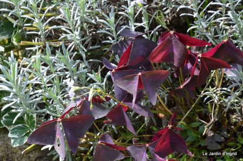 jardin automne,mariage Estor,barrage Bergerac 026.JPG