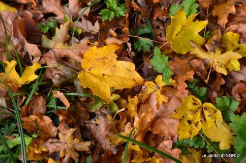 Romefort,bord de Creuse,vent,feuilles,jardin,canal 189.JPG