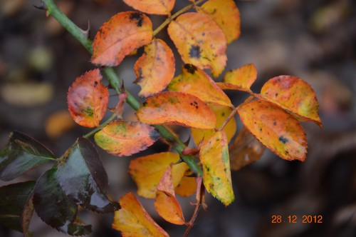 mésanges, nid frelons,fleurs décembre 125.JPG