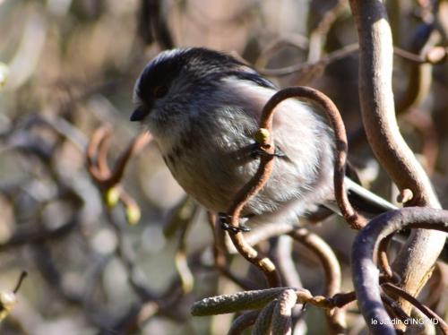 oiseaux,grotte du coulobre 091.JPG