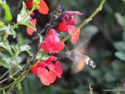 famille,jardin,bouquet,papillons 096.JPG