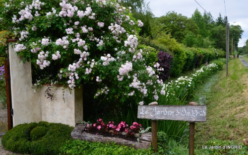 canal,fleurs blanches,marguerites,LE FLEIX,osier 002.JPG