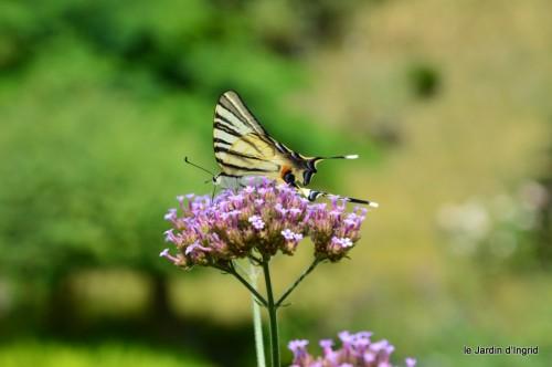 datura,papillon,Meyrals,déco Bergerac,bignonia 042.JPG