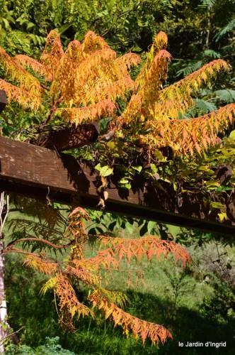 jardin octobre,chez Marylaur,Arnaud ,Ariane,la mer,sauges 224.JPG