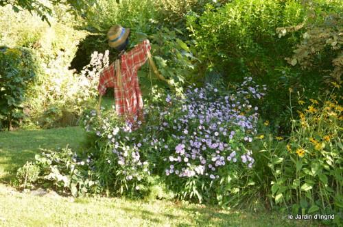 jardin,asters,fleurs blanches,chatte,rosiers roses 056.JPG