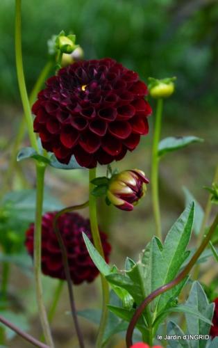 jardin ,bouquet 078.JPG