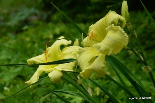 juin jardin,bouquet,sophie 057.JPG
