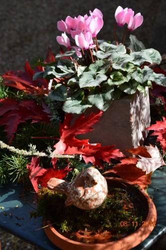 petit érable,le canal et lejardin àl'automne 013.JPG