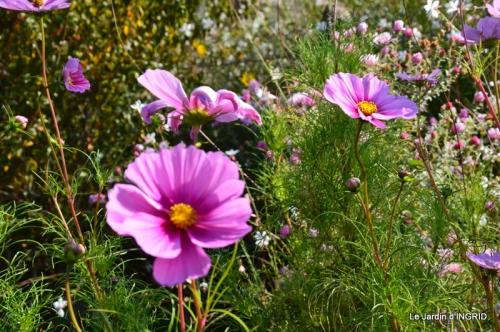 jardin Mme Perichou,grandes fleurs,bouquet,jardin 014.JPG