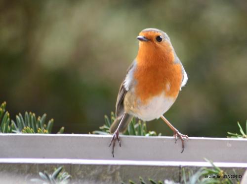 Julie,givre,oiseaux,lutins 033.JPG
