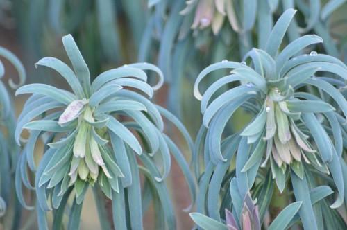 les mésanges,fleurs de février 067.JPG