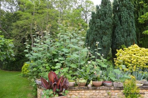 jardin,chez Bernadette,puces,cygnes,pluie 089.jpg
